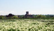 Sant Ramon: La torre de Mejanell  Ramon Sunyer