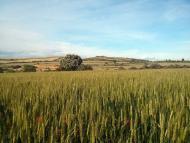 Vicfred: paisatge  Ramon Sunyer