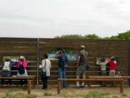 Granollers: Dia Mundial de les Aus Migratòries als Patamolls  Ajuntament TiF