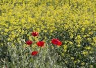 Montcortès de Segarra:   marta maseras