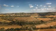 Montornès de Segarra: Ametllers  Ramon Sunyer