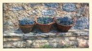 Torà: coves de raïms  Ramon Sunyer