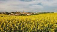 Calaf: Els mars grocs de la colza  Ramon Sunyer
