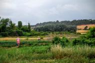 Biure de Gaià: Horts  Ramon Sunyer