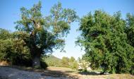 Rocamora i Sant Magí de la Brufaganya: Paisatge  Ramon Sunyer