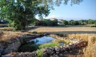 Viladeperdius: Bassa de la font  Ramon Sunyer