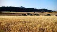 Vallespinosa: paisatge  Ramon Sunyer