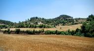 Montlleó: Paisatge de la rasa del Coguelera  Ramon Sunyer