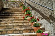 Estaràs: detall floral  Ramon Sunyer