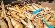 Calaf: carbasses de tota mena  Ramon Sunyer
