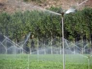 L'informe recomana la limitació extensió de regadius per protegir hàbitats naturals