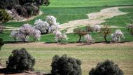 Sant Antolí i Vilanova: ametllers florits  Ramon Sunyer