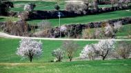 Pavia: ametllers florits  Ramon Sunyer