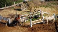 L'Ametlla de Segarra: cavalls de cal Perelló  Ramon Sunyer