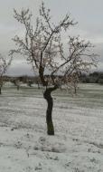 Castellnou d'Oluges:   Castellnou d'Oluges