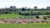 Sant Ramon: Paisatge  Ramon Sunyer