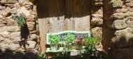 Mont-Roig: detall floral  Ramon Sunyer