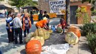 Concurs de carbasses gegants de Sedó