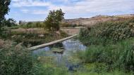 Vergós: peixera al riu Ondara  Ramon Sunyer