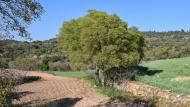 Palouet: paisatge  Ramon Sunyer