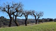 Vilagrasseta: paisatge  Ramon Sunyer