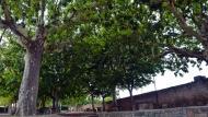 Guissona: Font de l'estany  Ramon Sunyer