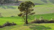 La Tallada:   Ramon Sunyer