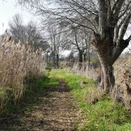 Sedó: Camí de la peixera  Ramon Sunyer