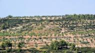 Ciutadilla: paisatge  Ramon Sunyer