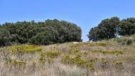 Concabella: paisatge  Ramon Sunyer