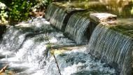 Hostafrancs: Peixera d'Hostafrancs al riu Sió  Ramon Sunyer