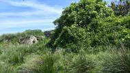 Pallerols: paisatge  Ramon Sunyer
