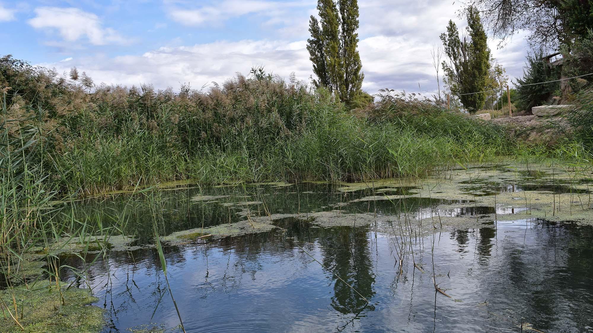 Espacio fluvial  Peixera de Vergós