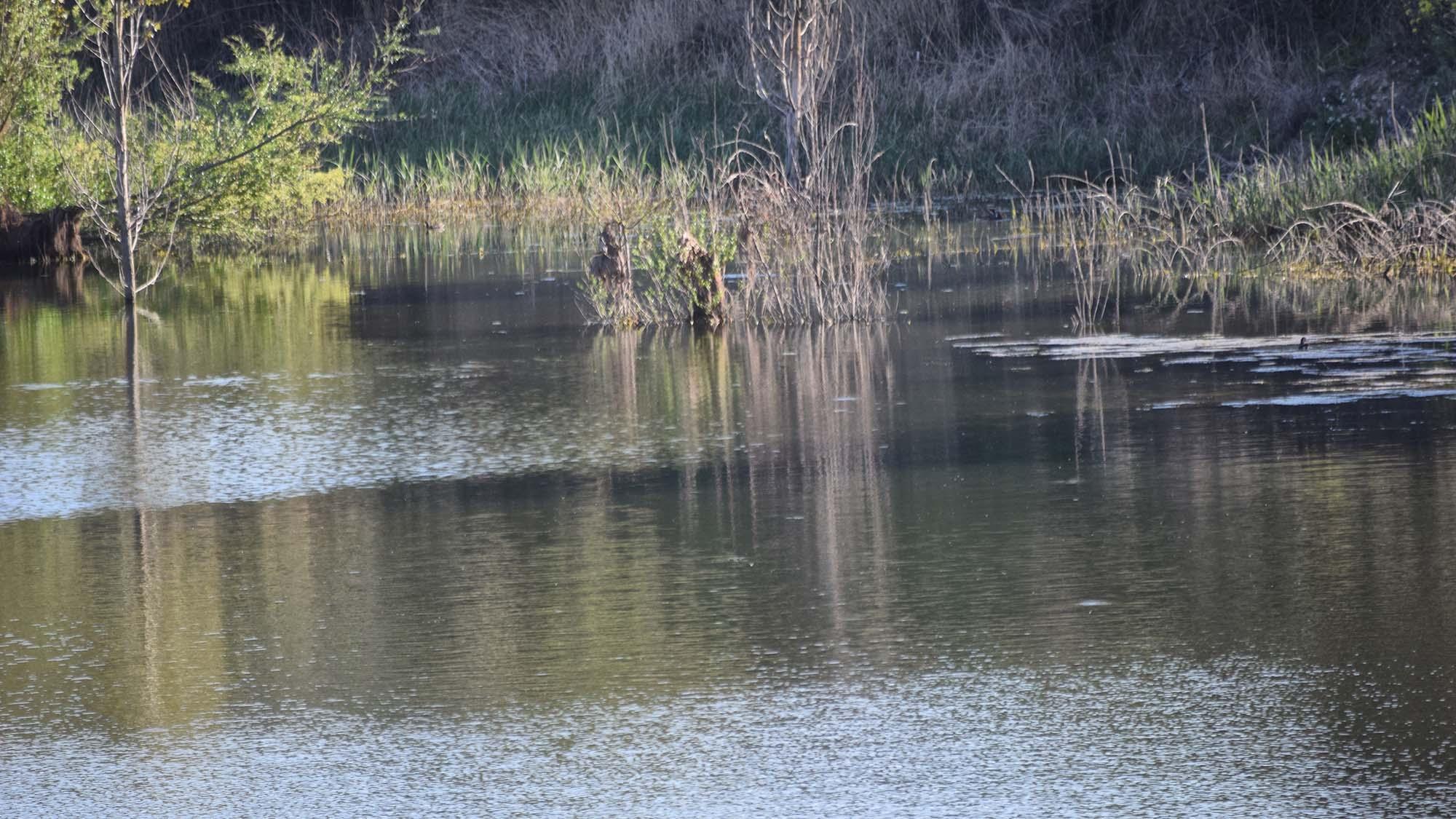Espai fluvial  Bassa de Palouet