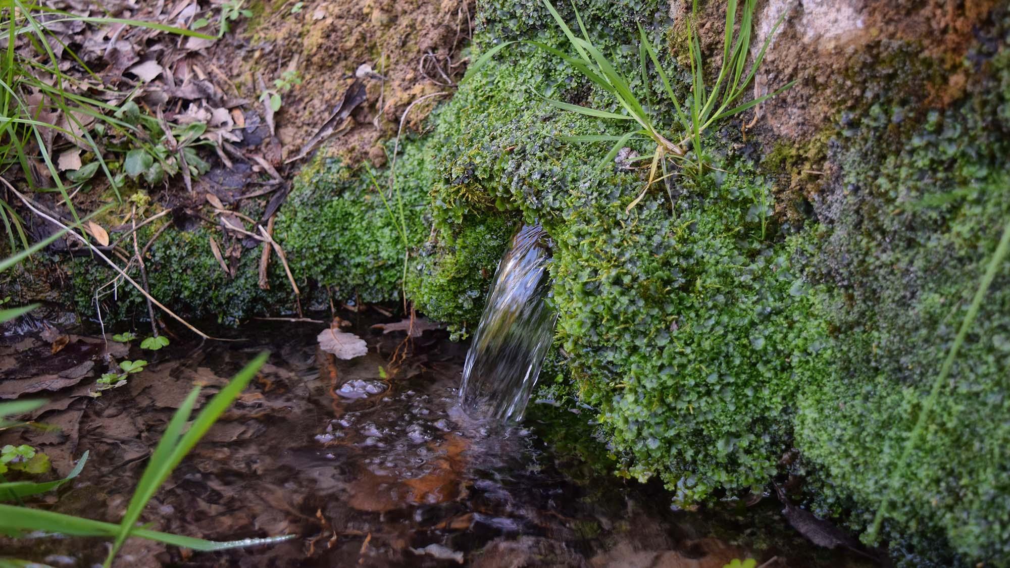 Espai fluvial  Peixera de Sedó