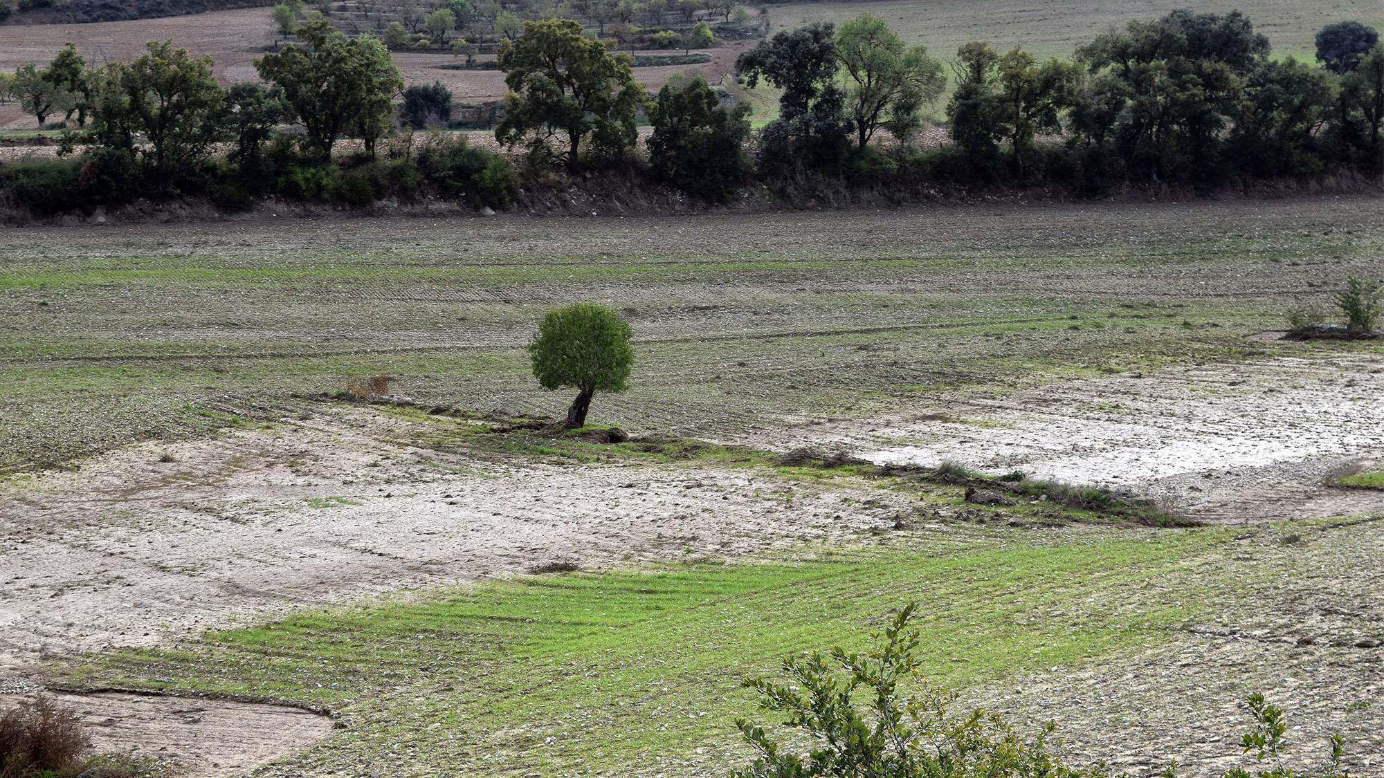 Ajuts destinats a les explotacions agràries afectades pels aiguats