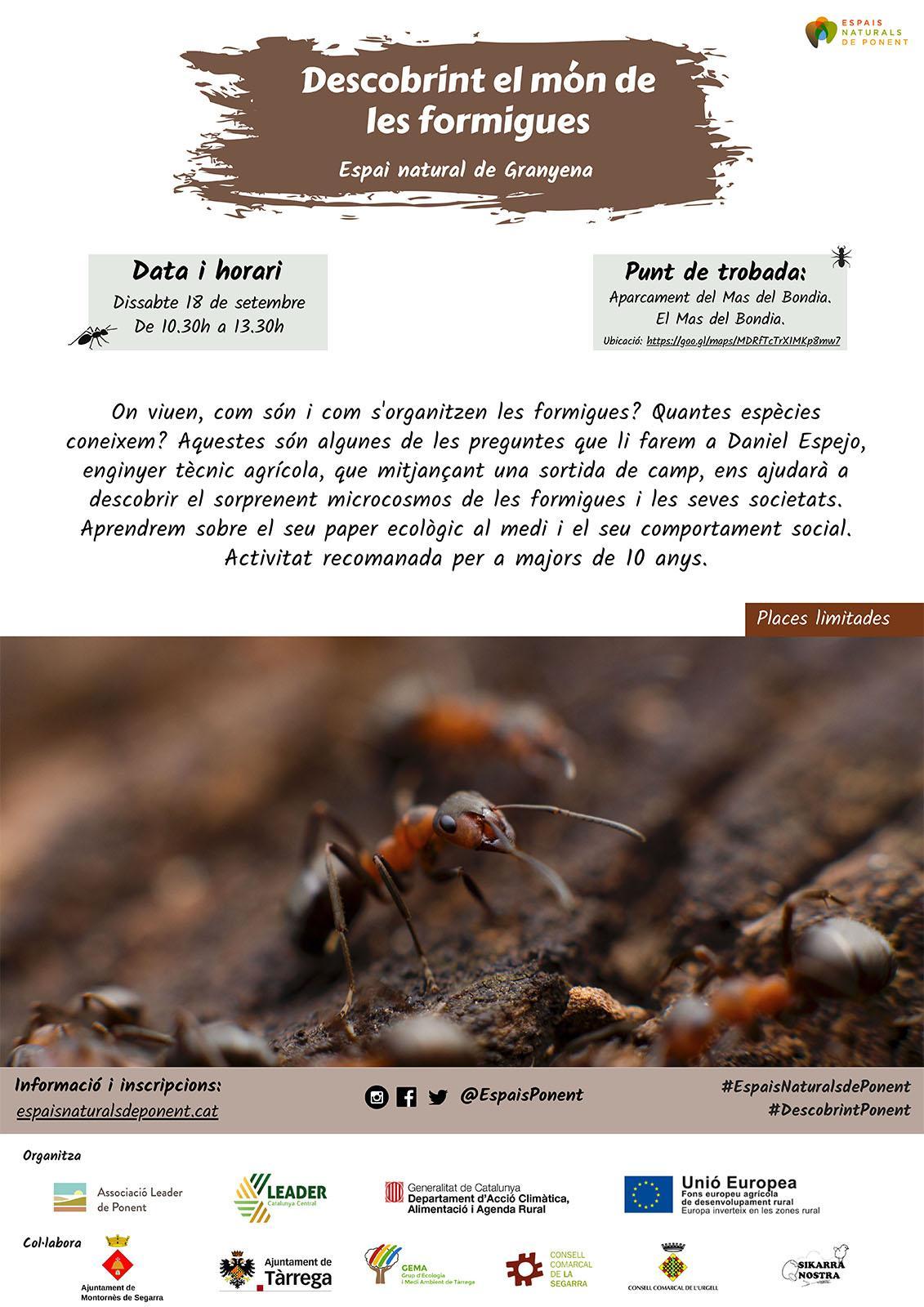 cartell Descobrint el món de les formigues